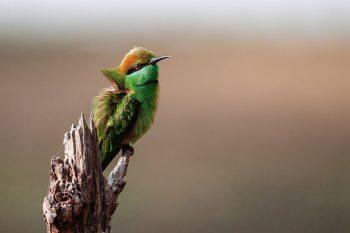 le migliori bridge permettono di riprendere animali selvatici, come l'uccello in questa foto