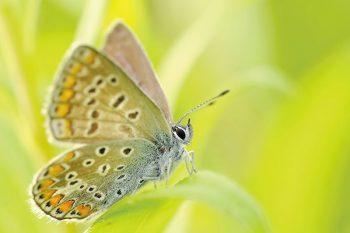 foto di una farfalla ripresa con obiettivo macro