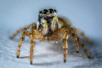 un ragno ripreso con obiettivo macro