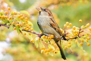 foto di un uccello scattata con una lunghezza focale molto spinta