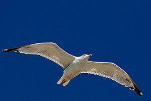 uccello fotografato con un tempo di posa rapido