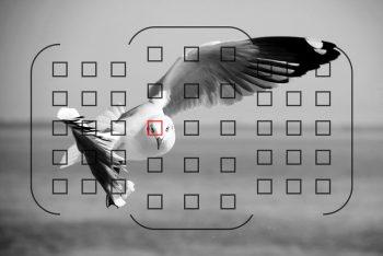 AF continuo usato per fotografare uccello in volo